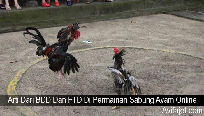 Arti Dari BDD Dan FTD Di Permainan Sabung Ayam Online