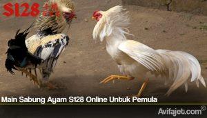 Main Sabung Ayam S128 Online Untuk Pemula