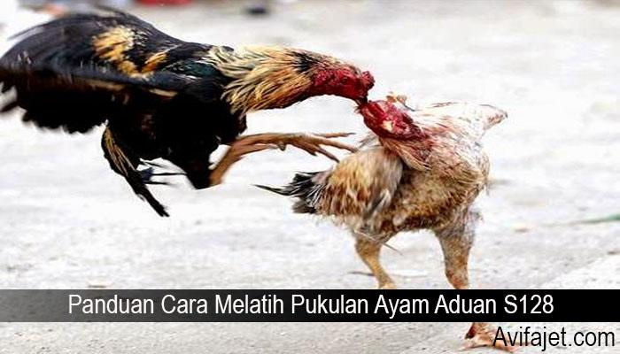 Panduan Cara Melatih Pukulan Ayam Aduan S128