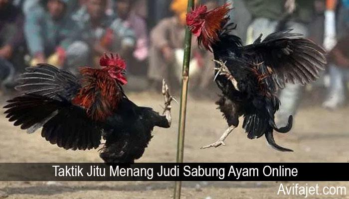 Taktik Jitu Menang Judi Sabung Ayam Online