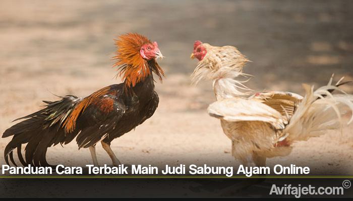Panduan Cara Terbaik Main Judi Sabung Ayam Online