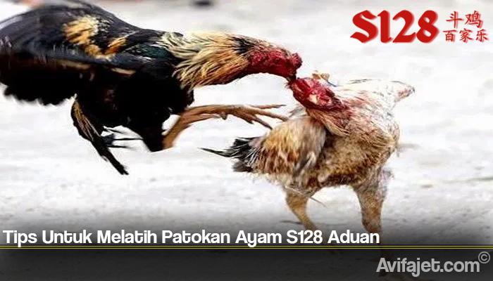 Tips Untuk Melatih Patokan Ayam S128 Aduan
